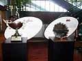 アジア大会のトロフィーと、優勝プレート