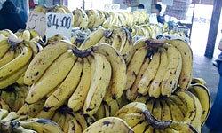 やっぱりバナナです
